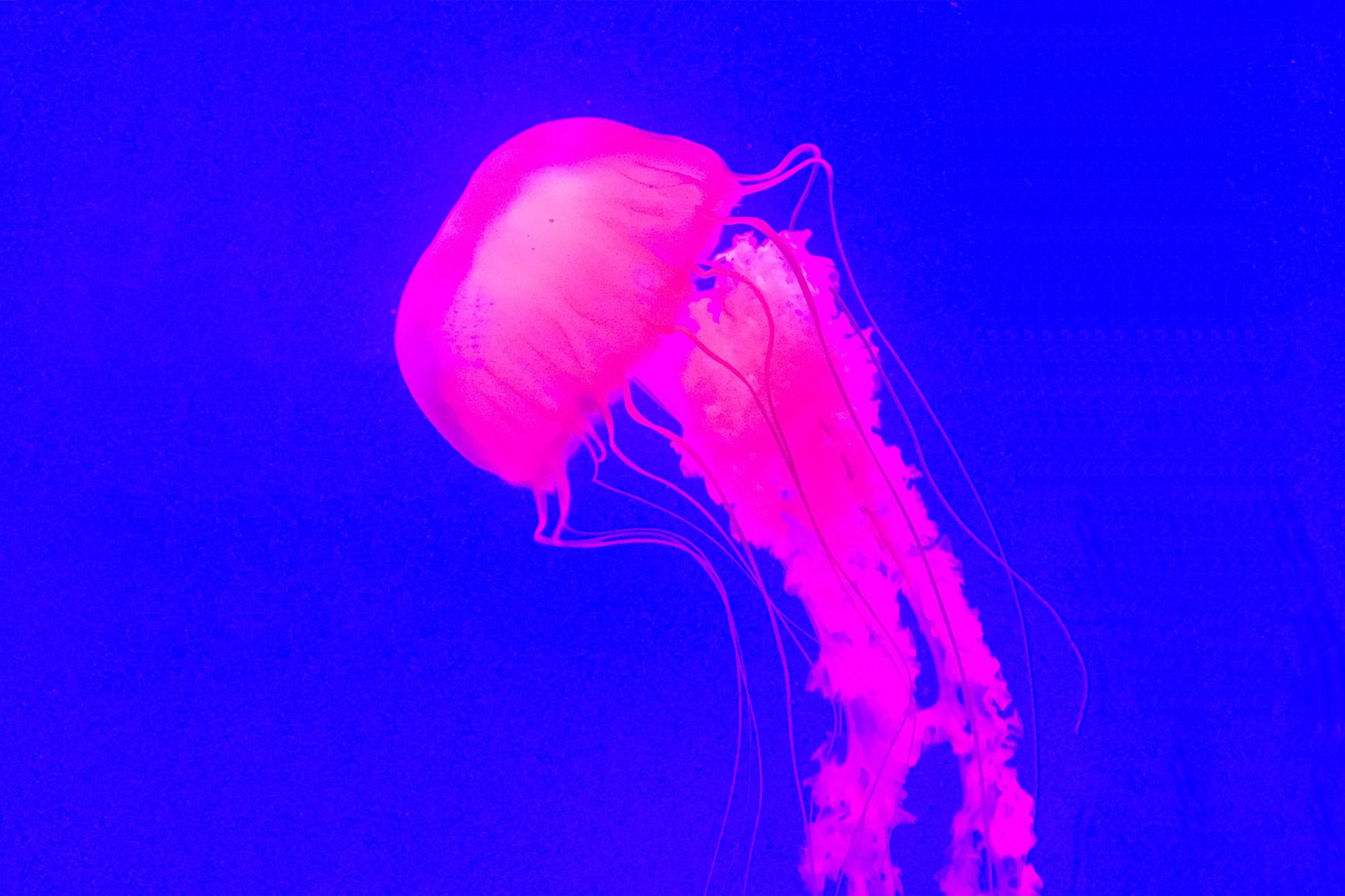 gpj-studio-visual-exploration-jelly-fish-03