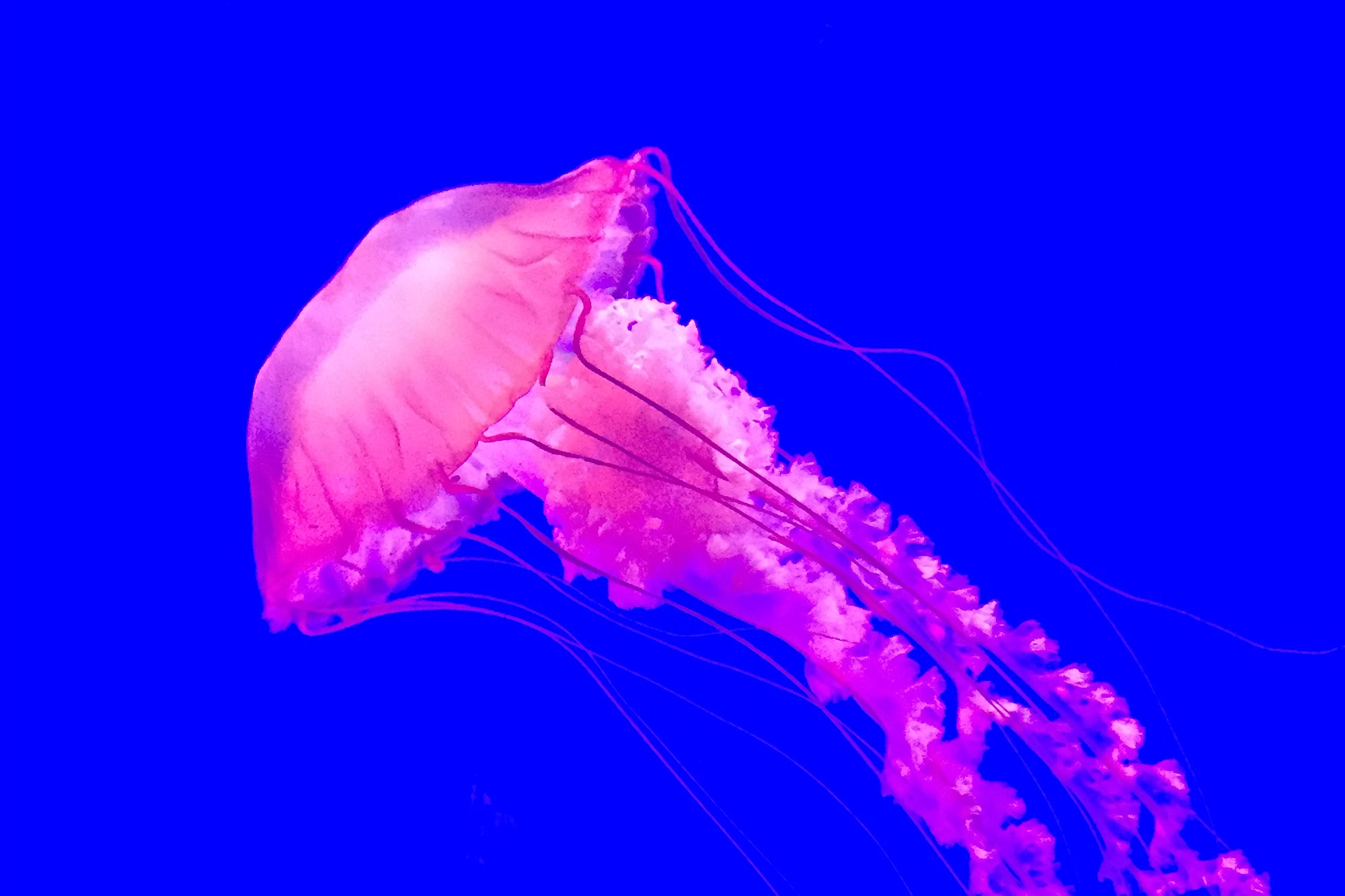 gpj-studio-visual-exploration-jelly-fish-04