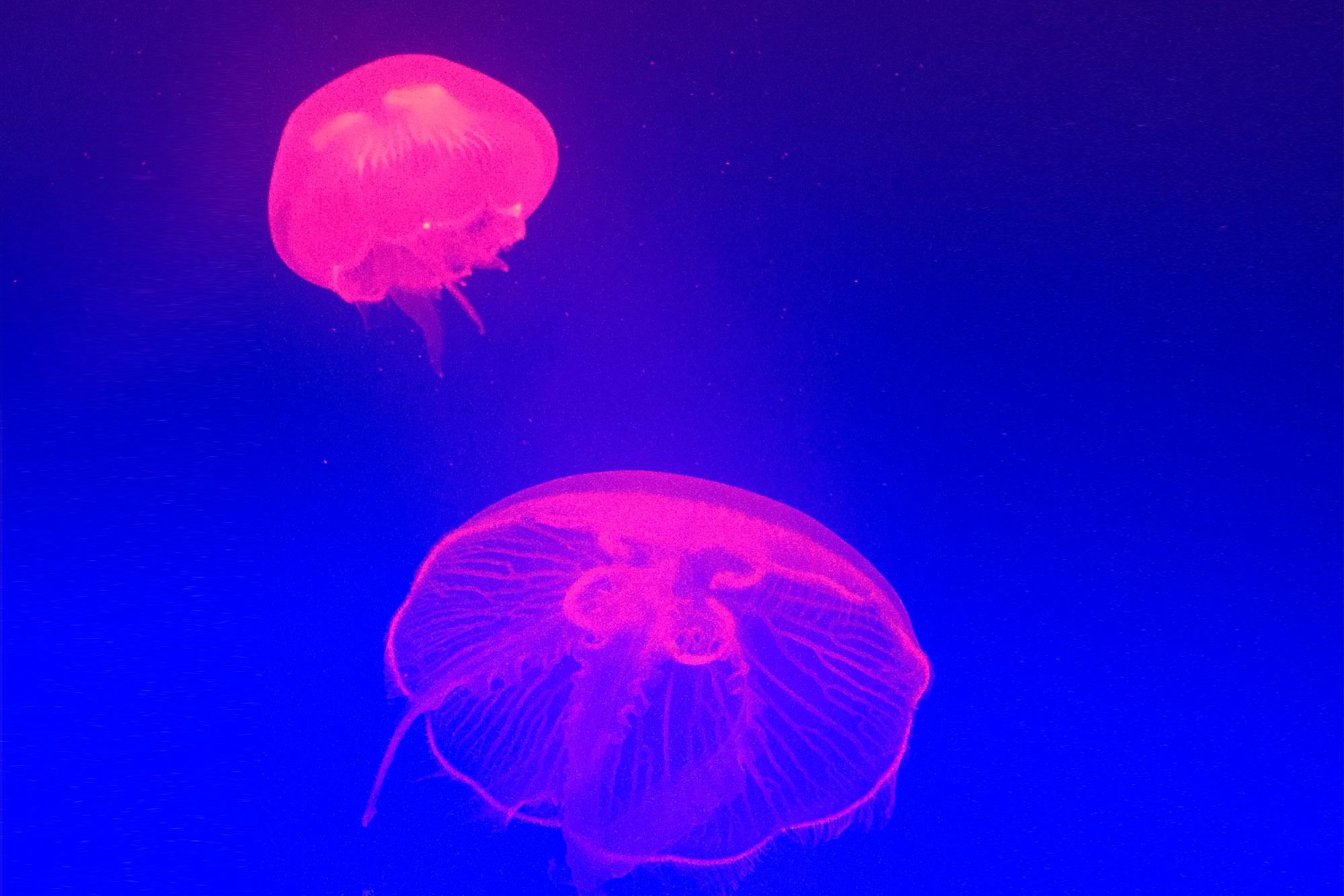 gpj-studio-visual-exploration-jelly-fish-07